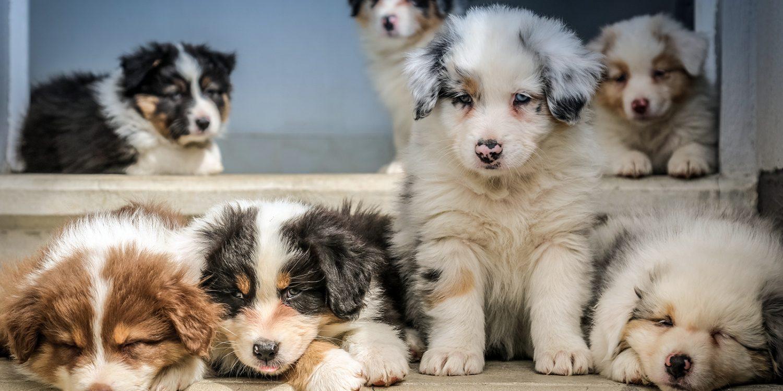 köpeklerle ilgili