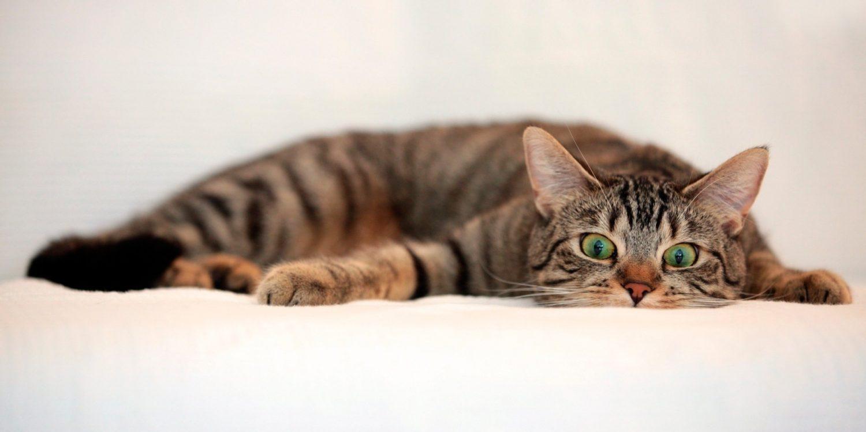 kedilerle ilgili